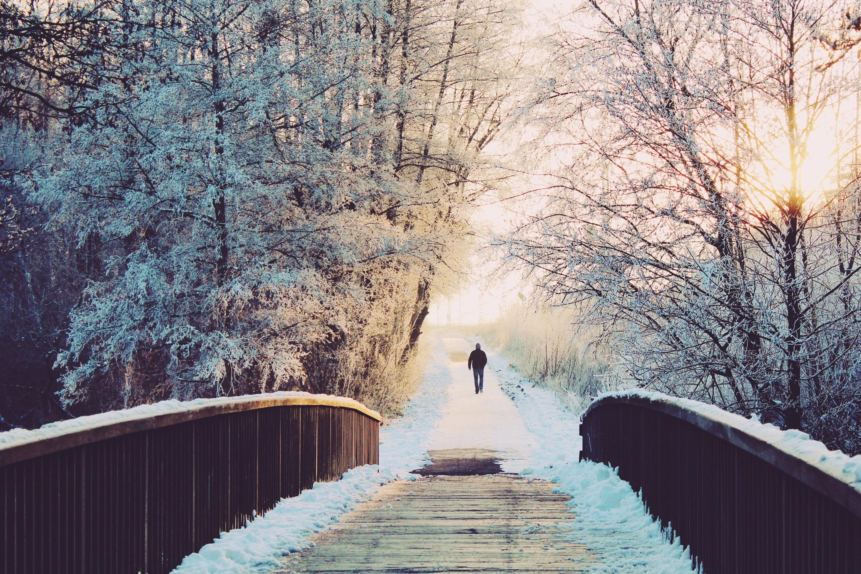alone-branches-bridge-274778