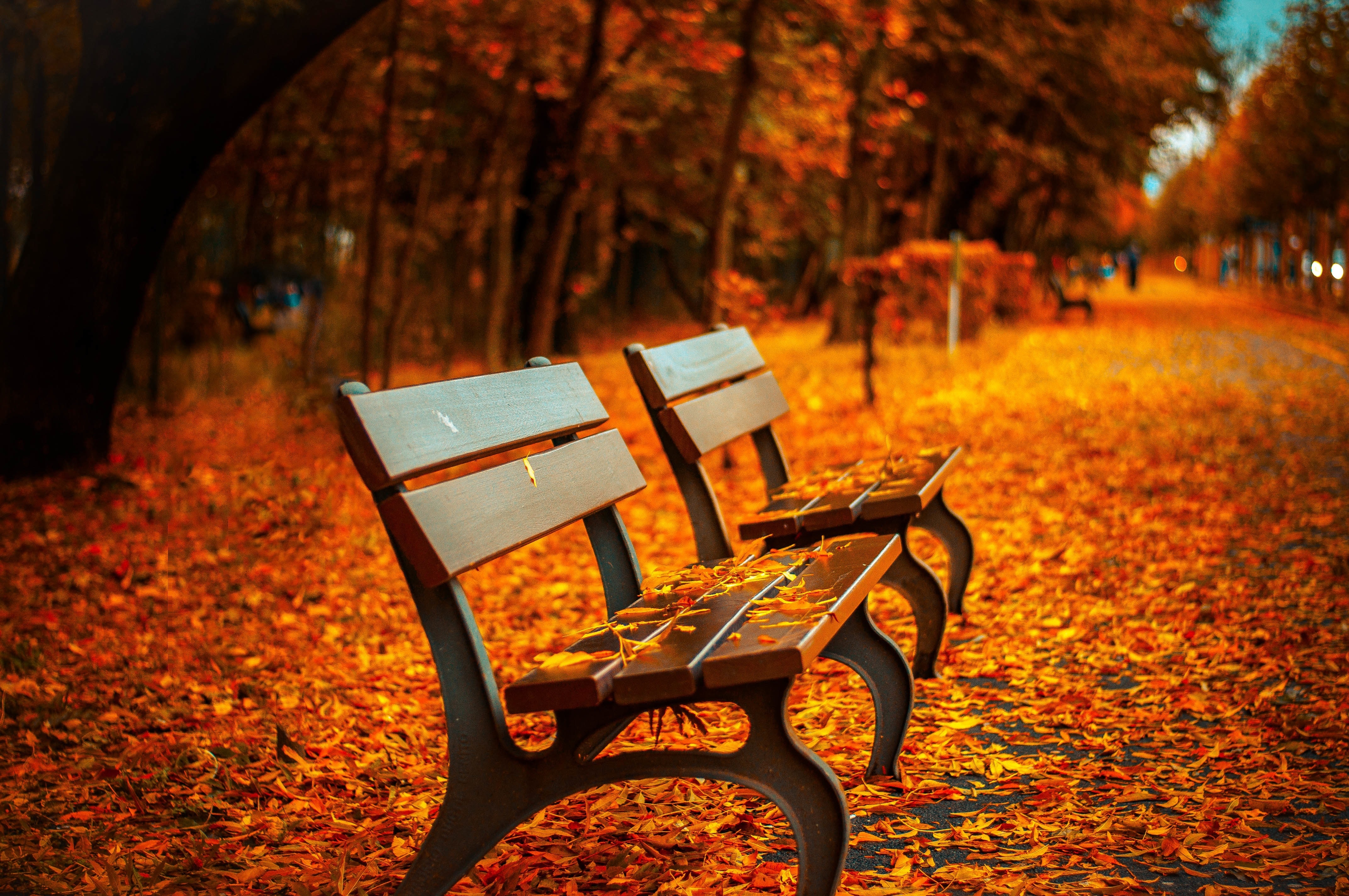autumn-avenue-bench-40884